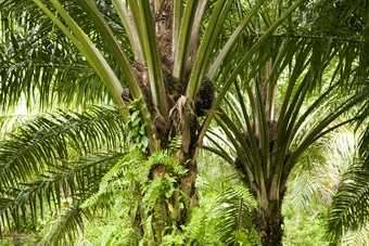 Wilmar has been criticised for way it sources palm oil