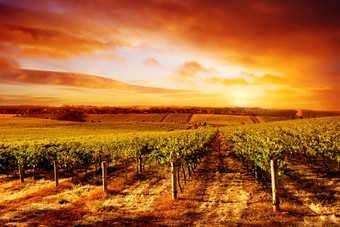As the sun sets on the holiday period, its decision time for the winemakers of the northern hemisphere