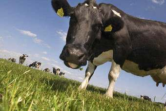 "Bright ""increasing presence in Australian dairy sector"""