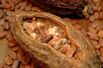 INDONESIA: Nestle, Petra Foods to join forces on sustainable cocoa