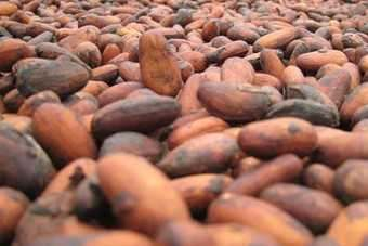 Ivory Coast accounts for 40% of worlds cocoa bean production