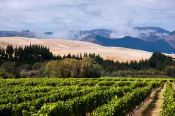 Chinese investors join foreign owners club in New Zealand wine
