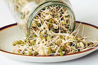 The European Commission has banned the import or sale of sprouts from an Egyptian trader following a deadly E. coli outbreak