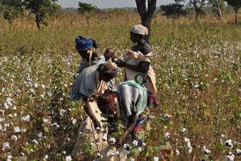 Zimbabwe is the latest country to sign up to the Cotton made in Africa (CmiA) initiative