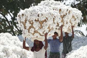 This years world cotton crop is set to reach record levels