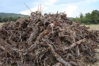Comment - Wine - EU to Uncork a Vine Old Mess