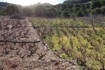 Some say the reforms will damage smaller vineyards