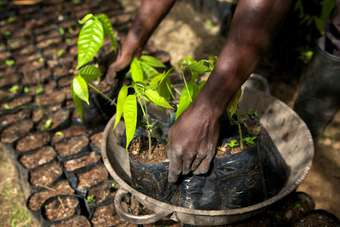 Long-term cocoa sourcing is a challenge for Mars