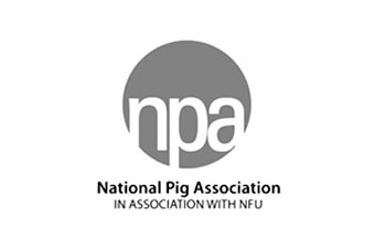 NPAs Longthorp sees pig prices rising