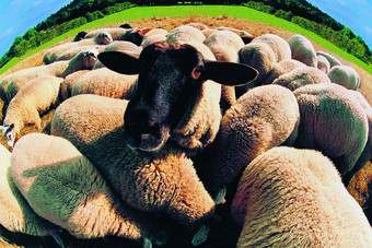 Another blow for retailers as wool prices soar