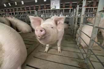 A move from JBS for Smithfield could raise anti-trust concerns in the US pork sector