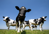 World Dairy Summit: Can dairy feed the world?