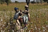ZIMBABWE: Joins Cotton made in Africa scheme