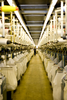 UK: Courtaulds hosiery site wins M&S eco-factory status