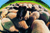 Spotlight on...Soaring wool prices