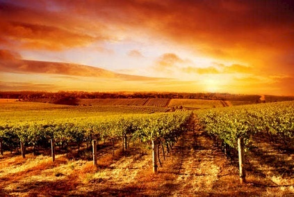 December 2014 Management Briefing - Environmental Sustainability in the Wine Sector