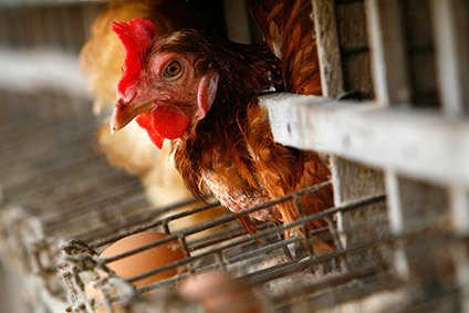 Sales and profits have fallen at US poultry processor Sanderson Farms