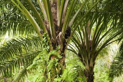 Frances lower house this week dropped plans to up countrys tax on palm oil