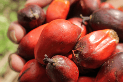 Industry report highlights forced labour in palm oil