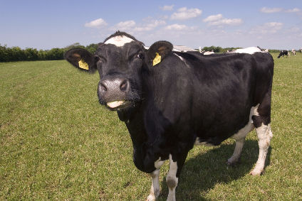 "Investors to build ""Russias largest"" dairy processing facility"