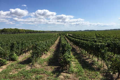 Is the wine industry prepared for the environmental changes ahead? - Comment