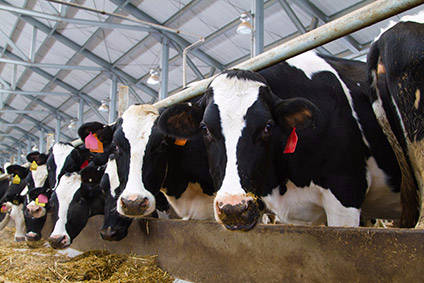 How investors are calling for action on meat production