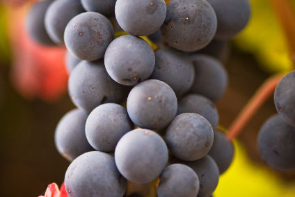 "Mahindra said deal takes it ""closer to vision of becoming a major global player in grapes"""
