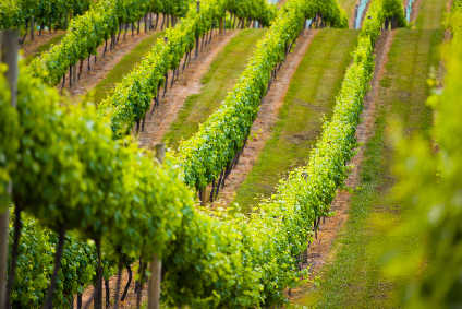 Why Marlborough is looking to up its New World wine game - Comment