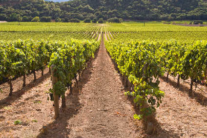 It takes about 8,500 litres of water to irrigate one hectare of vines for an hour