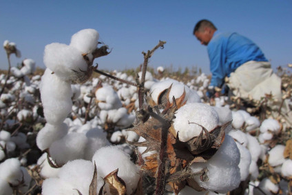 Better Cotton fund gets EUR2m from German government