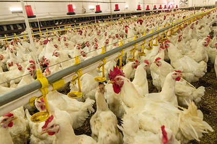 Ukraine said EU ban follows avian flu outbreak