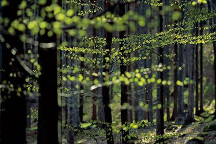 25% of viscose supply chain audited as forest-friendly