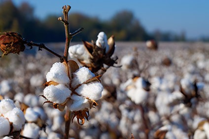 Mozambique hit a cotton production peak of 182,000 tonnes in 2012