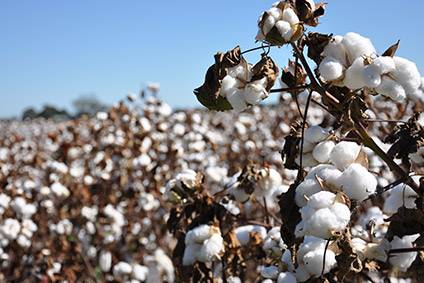 Cotton futures prices have declined 30% since the beginning of 2020