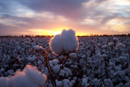Global push to drive uptake of sustainable cotton