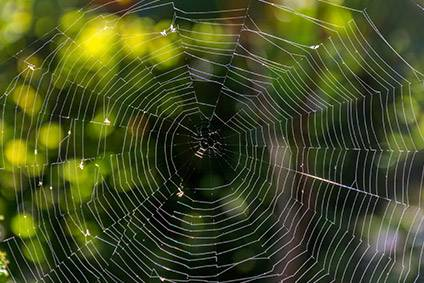 Spider silk is one of nature's strongest materials, and scientists have been attempting to mimic its properties for a range of applications, with varying degrees of success