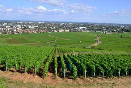 Domaine Prieur-Brunet includes 18 hectares of vineyards