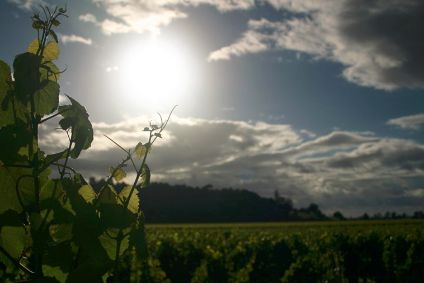 New Zealand Winegrowers will give the UK trade a chance to win a trip to New Zealand