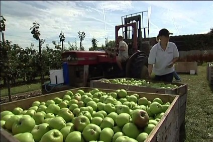 The supply of seasonal workers is in jeopardy, says the NFU.