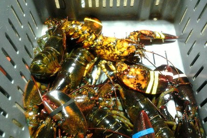 Lobster - among US food items facing additional Chinese tariffs