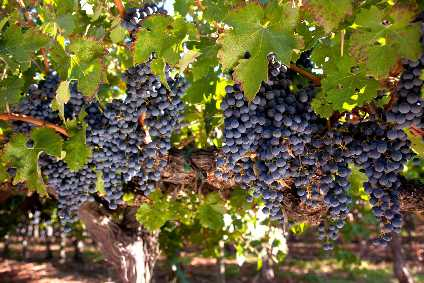 Why France's wine industry should look beyond COVID-19 for the source of its woes - comment