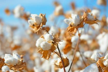 Supima cotton origin mapped to tackle supply chain fraud