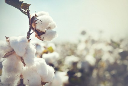 Better Cotton Initiative halts Xinjiang operations