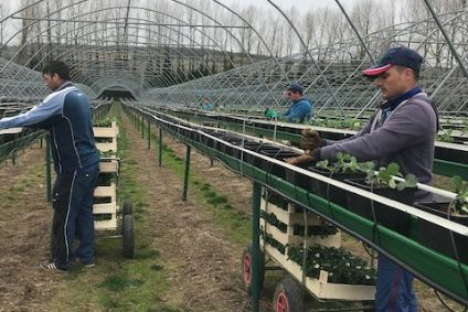 Berry Gardens - backing for robot farm scheme