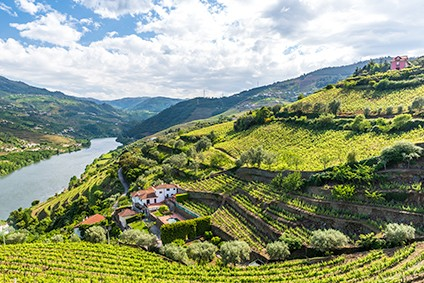 Sogevinus owns four vineyards in Portugals Douro Valley