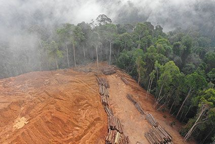 Why new industry deforestation coalition could be positive move