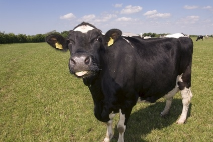 Chatham House urges for a reduction in meat and dairy consumption
