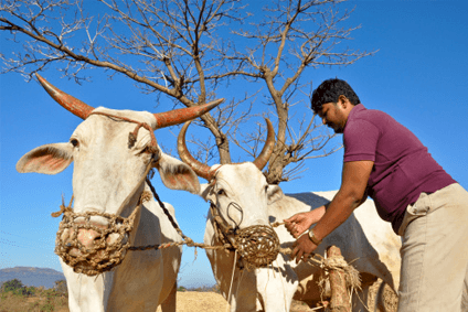 Indias government wants to help dairy farmers with outlet for milk