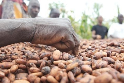 Chocolate industry hails latest cocoa sustainability initiative