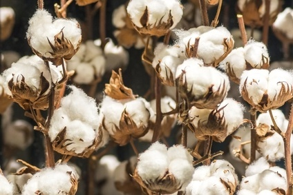 Whats the impact of Chinas cotton import cuts?